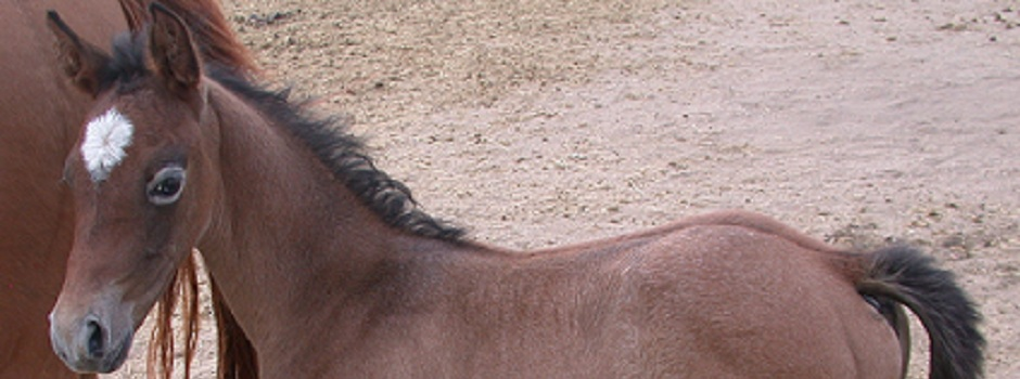 Seeing Dressage with a New Eye.