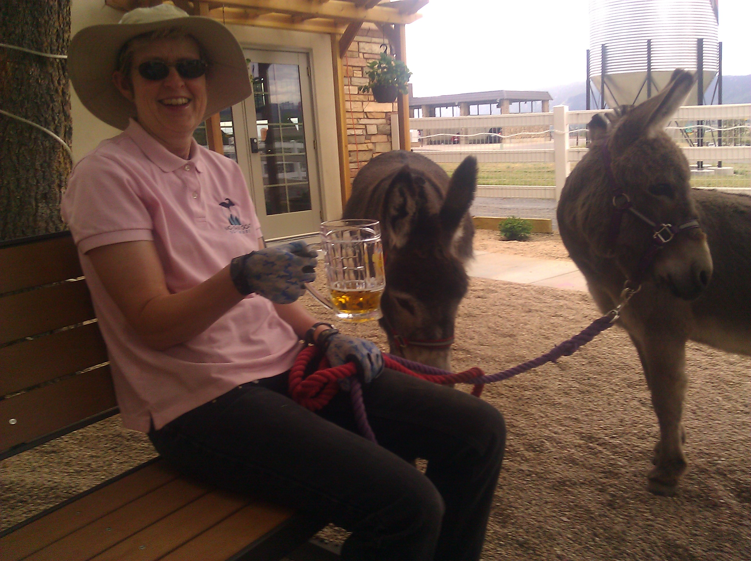 Donkeys in a Bar