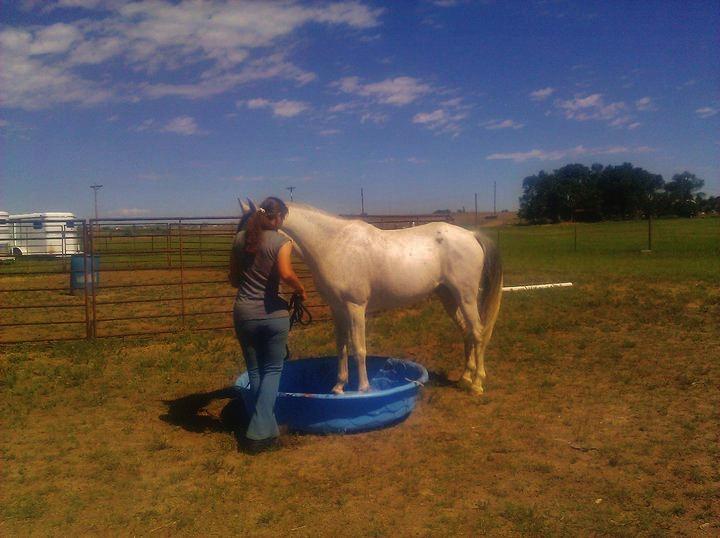 Horse Agility at Infinity Farm.