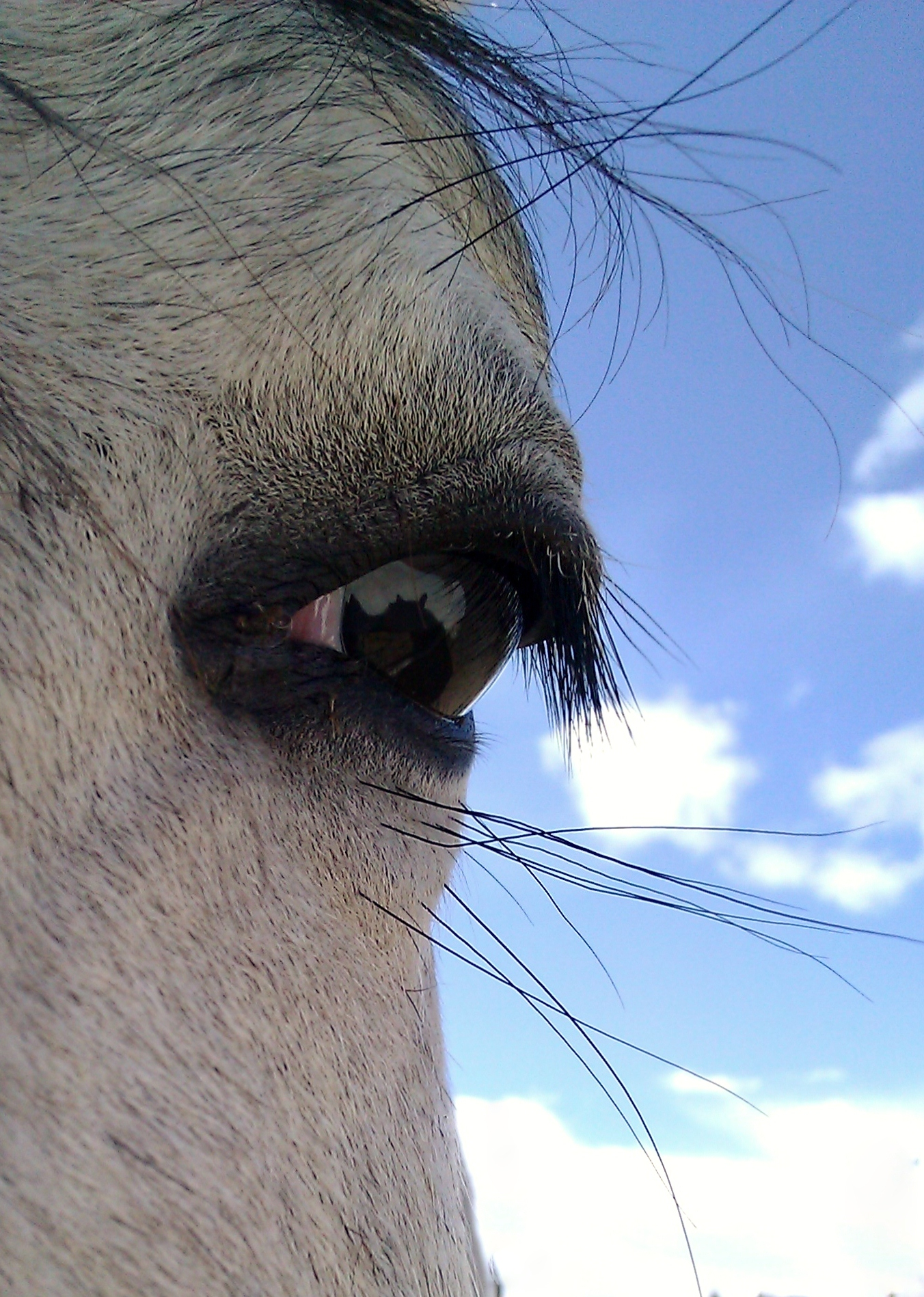 Is My Horse Suitable for Dressage?