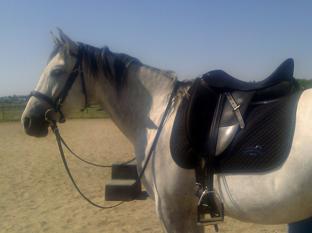 Discipline: Writing and Riding.