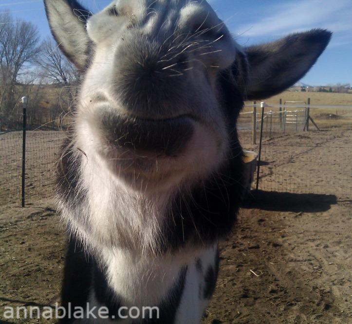 WM Donkey Kiss
