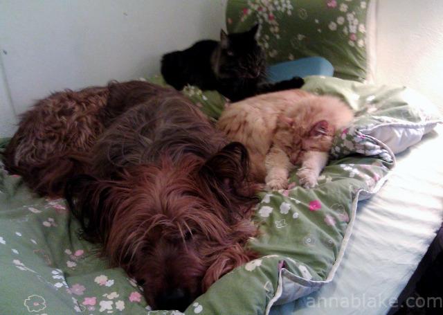 WM He sleeps with cats