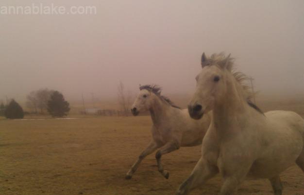 WMfog gallop