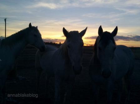 WM family dusk