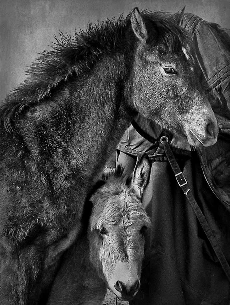Photo by Patrick McMahan
