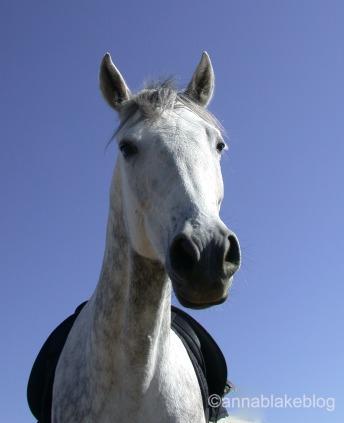 How Much Do Car Salesmen Make >> *Needs Confident Rider* « Horses |AnnaBlakeBlog | Equestrian