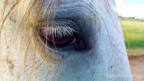 WM Clara eye.heart