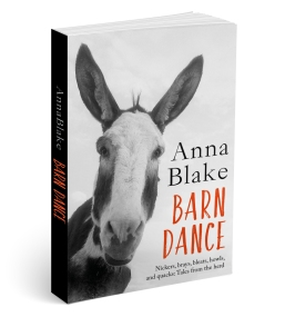 pr-barn-dance-3d-cover
