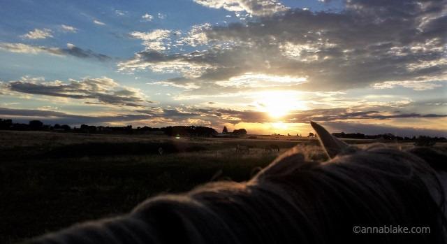 WM equine sunset