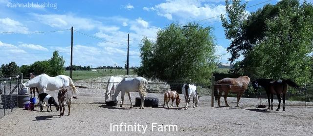 WM Infinity Farm