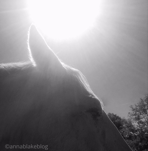 wm-spirit-sun