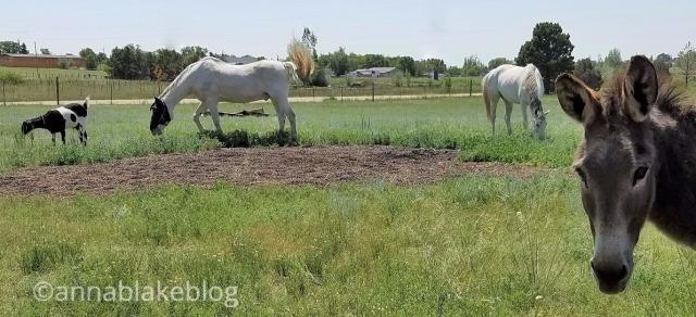 wm-lilith-pasture