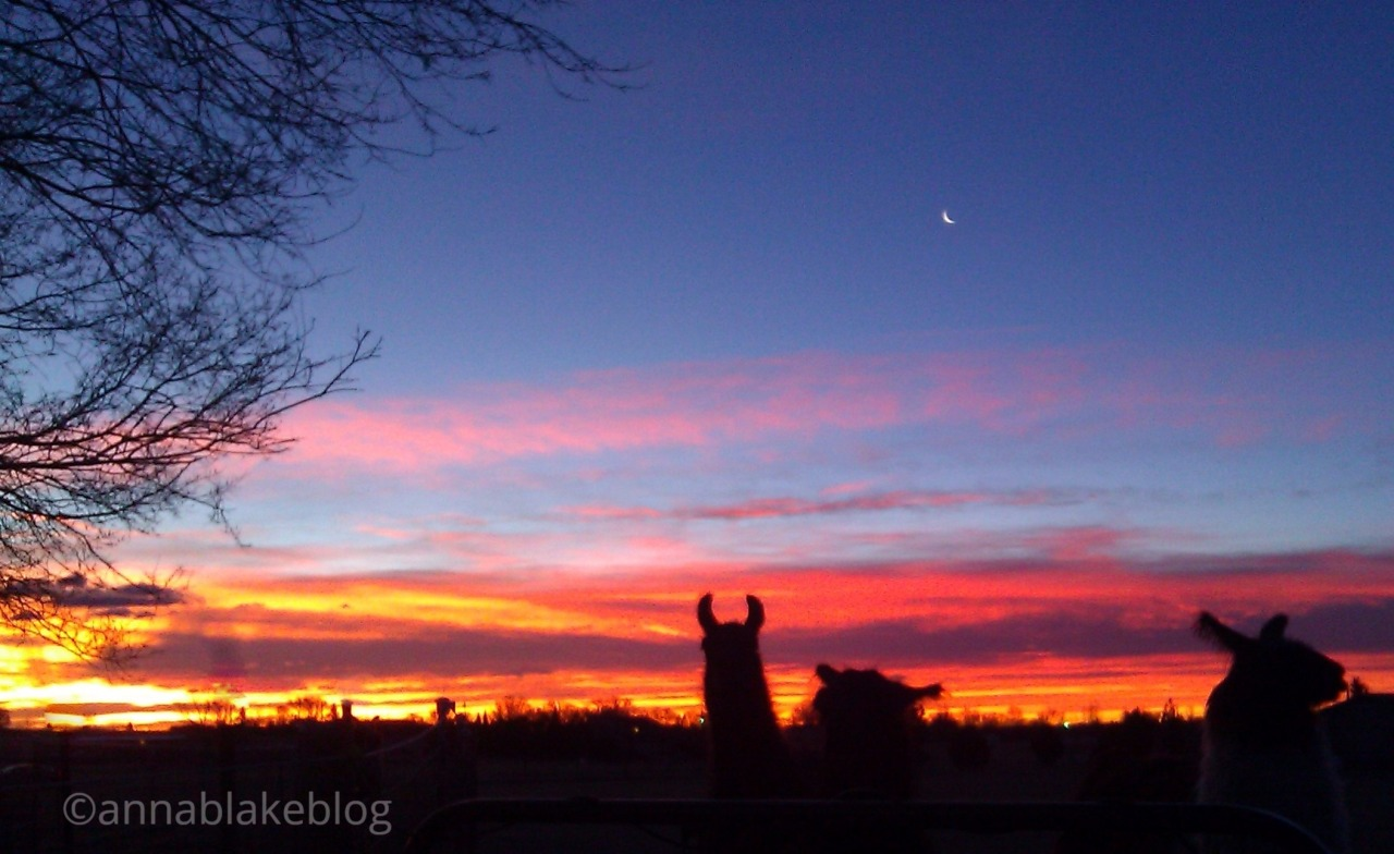 wm-sunrise-llama