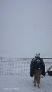 wm-clara-snow2