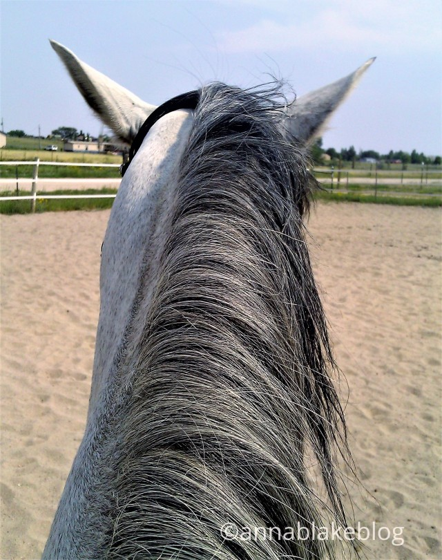 Riding the Middle: My Horse is Lazy.
