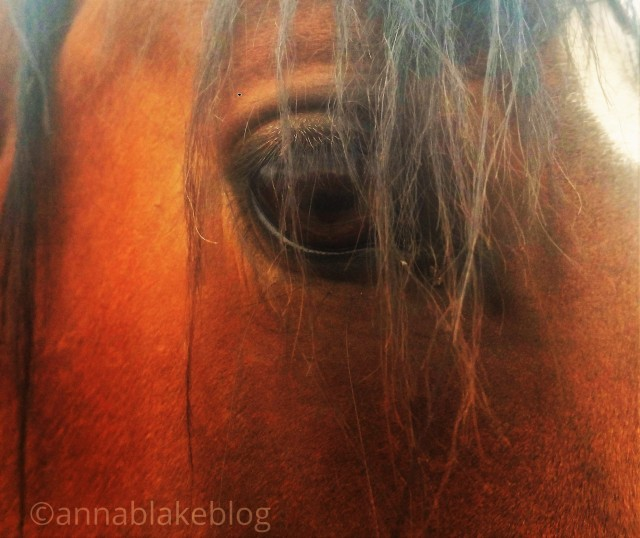 Making War on Horses: Is it Leadership?