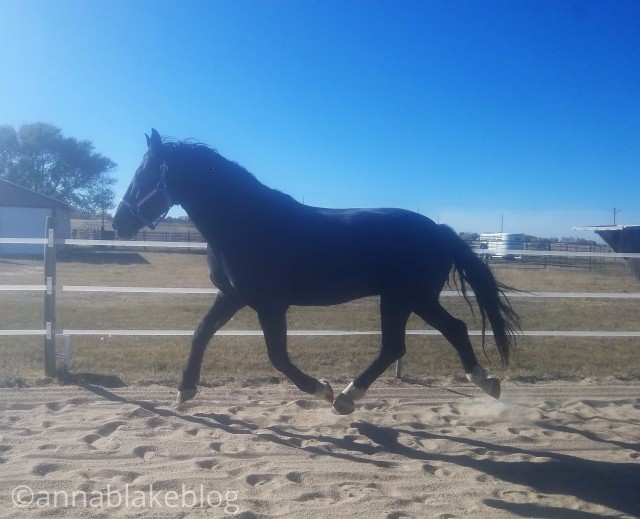The Middle Path: Why Gaits Matter