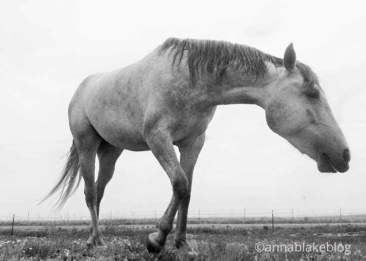 Calming Signals and Equine Stress